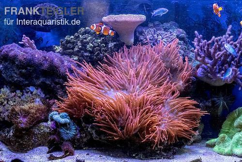 Meerwasserfische und Korallen bild oft tolle Kontraste