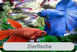 Aquaristik shop mit aquarium zierfischen zwerggarnelen for Zierfische aquarium