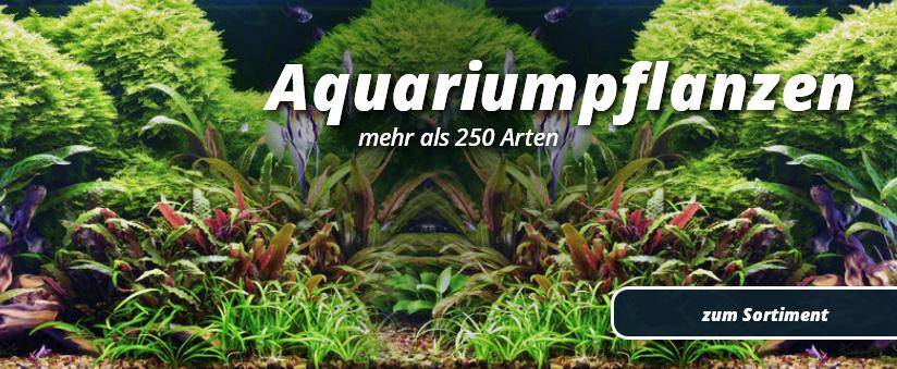 Aquaristik shop mit aquarium zierfischen zwerggarnelen for Aquaristik shop