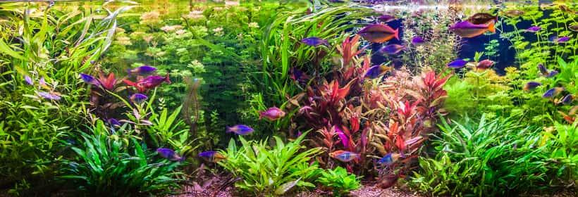 Aquarienpflanzen Kaufen Tolle Aquariumpflanzen Sets Verfugbar