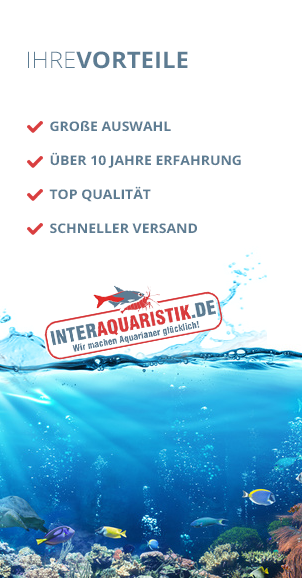 Kaltwasserfische aquaristik shop mit aquarium for Gartenteichfische shop